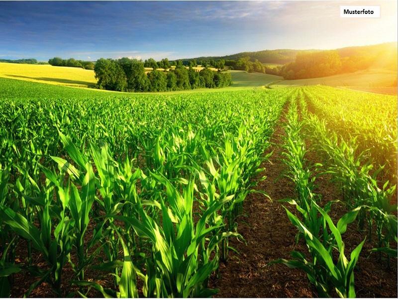 Grundstück Land und Forstwirtschaft in 96317 Kronach, Sommerleite